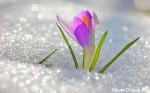 Погода и климат в Крыму. Какая погода в Крыму летом, осенью, зимой и весной?