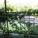 №1034.Крым.Балаклава-мини-гостиница,ул.Жукова, 900 руб.