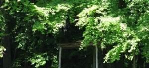 Турстоянка «Буковый кордон»
