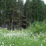 Турстоянка «Кутузовское озеро»