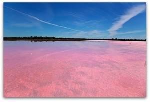 Розовое озеро в Крыму (Кояшское озеро)