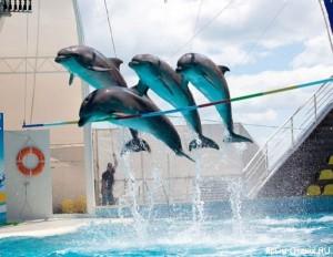 Дельфинарий Коктебель