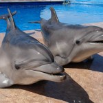 Дельфинарий в Арт-бухте
