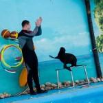 Дельфинарий Nemo в Феодосии